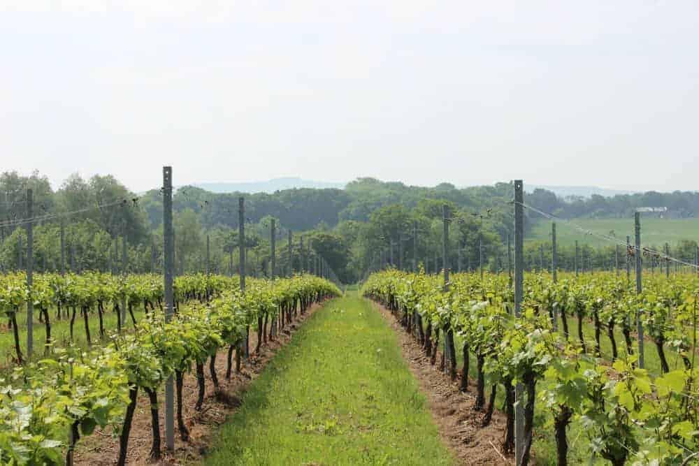 Great-British-Wine-Tours-10
