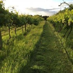 Giffords Hall – Wine Tasting Hen Parties In Suffolk