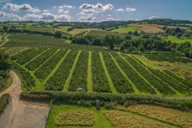 wine theme hen party in somerset