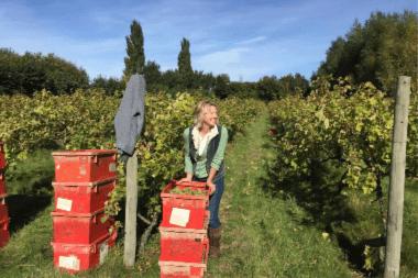 wine tasting hen do suffolk